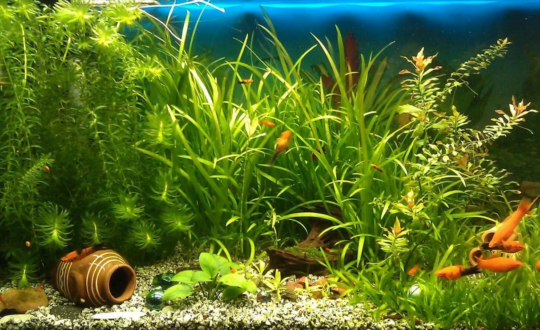 аквариум с рыбками к богатству